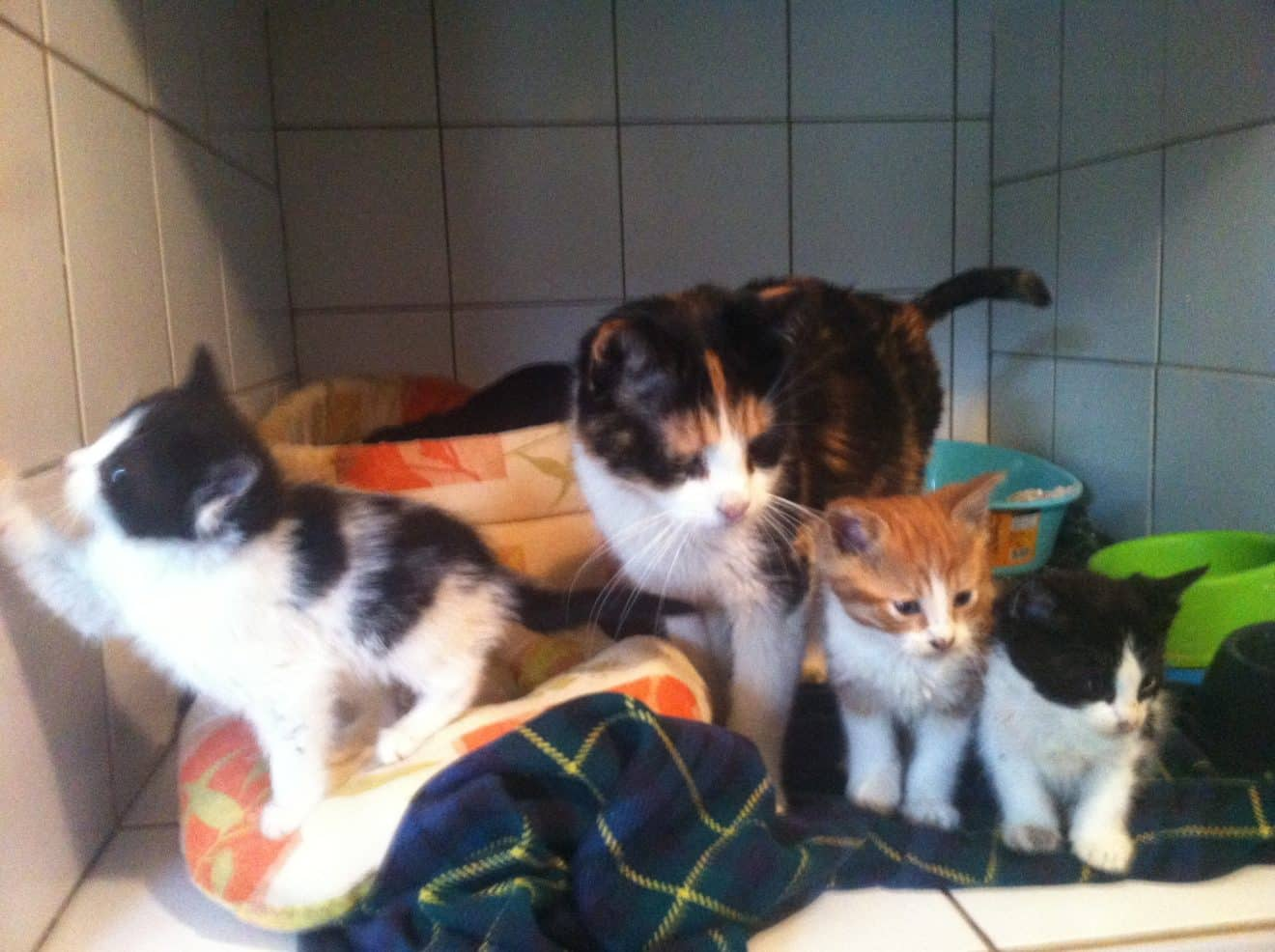 Premiers chatons